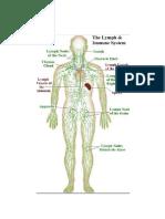 nodus limfatikus