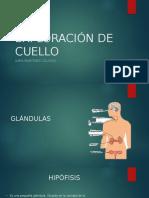 cuello.pptx