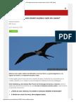 ¿Cómo Logran Las Aves Dormir en Pleno Vuelo Sin Caerse_ - BBC Mundo