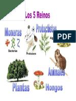 5 REINOS NATURALES