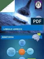 Neurofisiologia - Lobulo Limbico