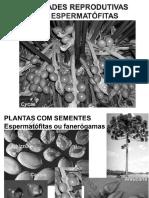 9. Plantas Com Sementes_Novidades Reprodutivas_JRP.ve - Reduzido - Online