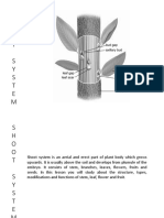 Shoot System - Stem, Leaf.pdf