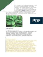 A Planta Folha Da Fortuna