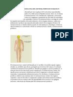 ANATOMIA-Y-FISIOLOGIA-DEL-SISTEMA-NERVIOSO-SOMATICO.docx
