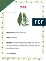 PLANTAS MEDICINALES PERU