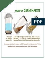 germinados (2)
