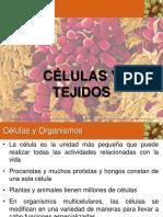 Células y Organelos Part 1.pdf