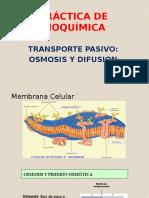 Práctica de Bioquímica Osmosis