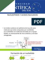 NUCLEOTIDOS Y ACIDOS NUCLEICOS.pdf