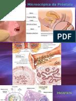 Desenvolvimento Humano - Prostata