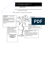 TYPE OF NEURONE-BIOLOGY FORM 5