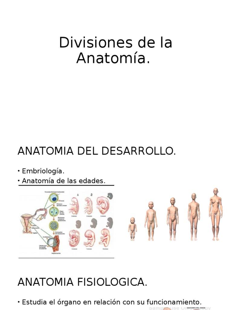 Divisiones de La Anatomía