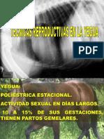 ciclo estral yeguas.pdf