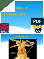 REPASO CBCC 3