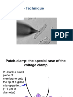 Patch Clamp
