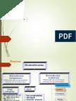 Carbohidratos y Lipidos