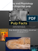 Anatomy Physiology Pulp