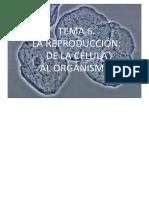 t6_reproduccion_de_la_celula_al_organismo.pdf