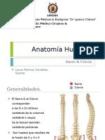 Anatomía Descriptiva Sacro & Cóccix