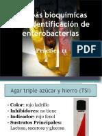 Pruebas Bioquímicas de identificacion