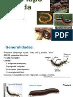 Myriapoda.pptx