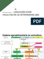 Aves Instalaciones.pdf