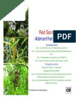 Adenanthera pavonina.pdf
