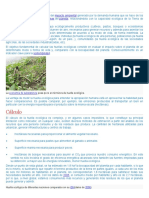 Huella ecológica.docx