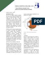 Ojo; Anatomía e Histología,Final