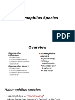Haemophilus Spp