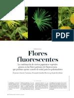 Flores y su florescencia