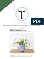 Catalogo Tropicalia de Plantas - Tropicalia Estudio