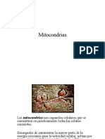 206_Mitocondrias