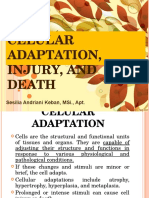 Cell Adaptation, Injury, And Death