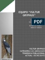 Vultur Gryphus.pptx