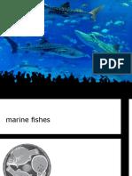Biologi Laut - Marine Fishes