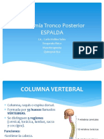 Anatomía Espalda