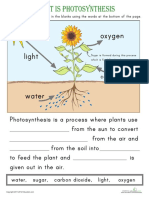 Photosynthesis Ws