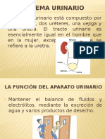 exposicoion sistema urinario.pptx
