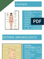 Diapositivas Del Cuerpo Humano 1 Jhon