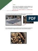 COSECHA DE HABA.pdf