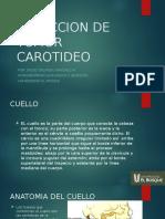 reseccion-carotidea.pptx