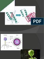 Abiogenesis Versus Biogenesis