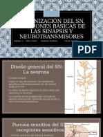 Organización del sistema nervioso, funciones básicas de las sinapsis y neurotransmisores