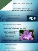 Seminário Biologia Vegetal -Aguapé.pptx