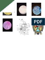 imagenes de celulas