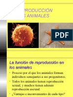 Reproduccion Animales