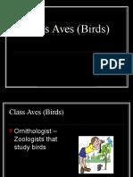 Class Aves (Birds)