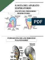 Seminario.mecanismos de Defensa Pulmonar